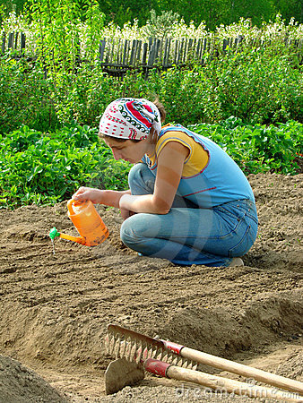 Sowing and watering