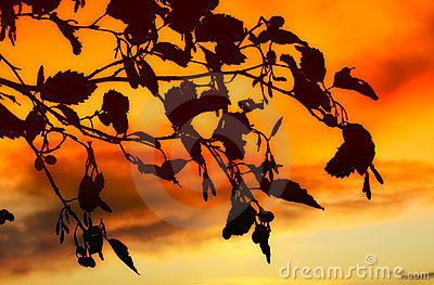 Sunet leaves in autumn