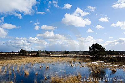 Landscape on the veluwe