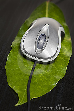 Computer mouse on a leaf