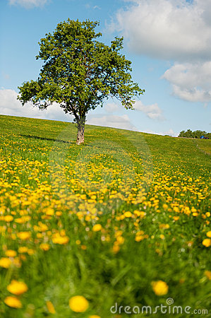 Tree in flower fields