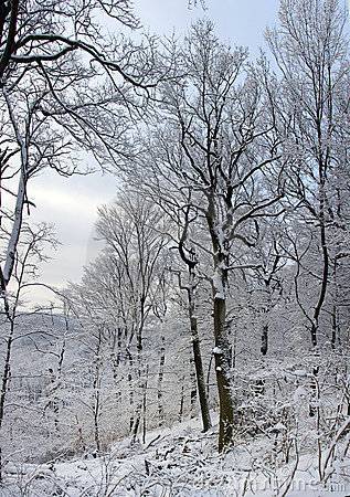 Image of beautiful trees in winter forest