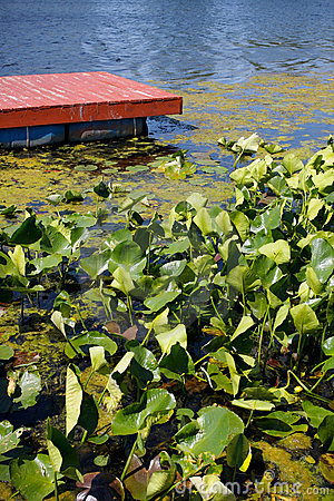 Red Lake Dock and Lilies