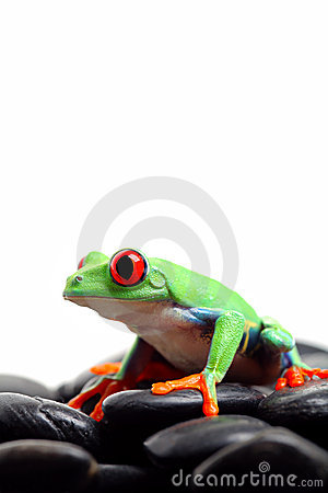Frog on rocks isolated white