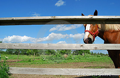Brown horse and fence