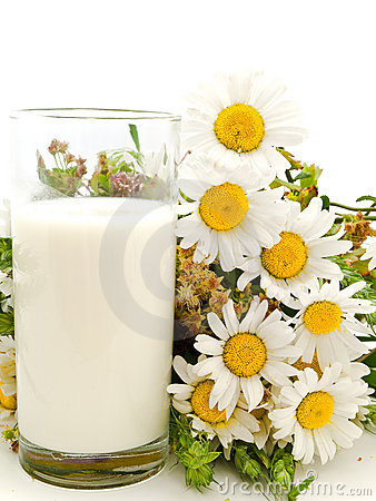 Milk and camomile