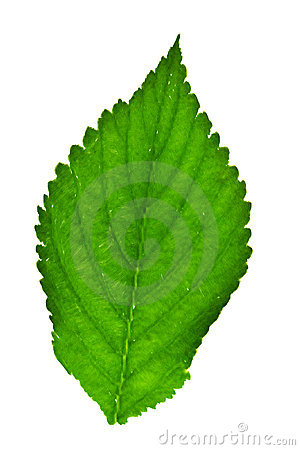Painted green leaf