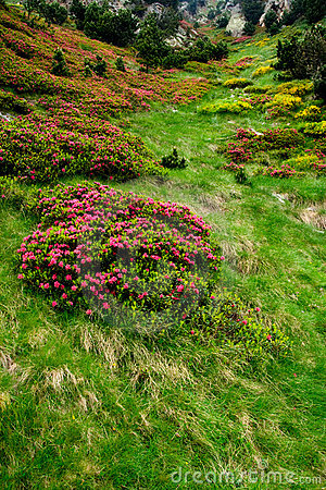 Flowers and grass in Vall de Nuria, pyrenes, Spain
