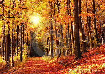 Forest sunset in autumn