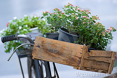 Flowers on an old bicycle