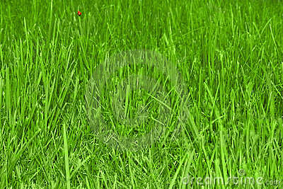 Beautiful grass field texture