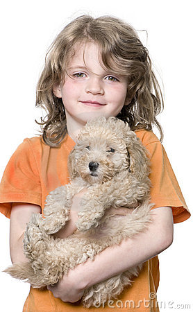 Young girl with her toy Poodle puppy (9 weeks old)