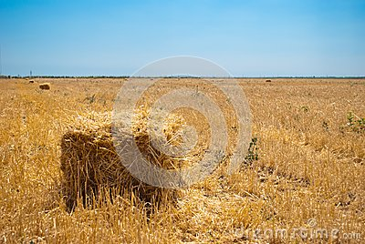Rectangular haystacks on a field of straw, on a sunny summer day, against a background of sky and trees