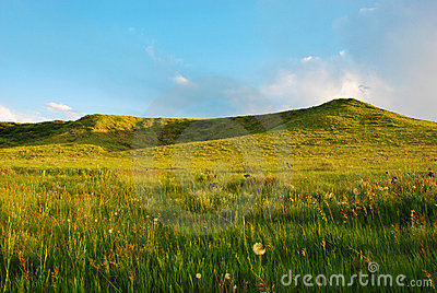 Two Low Green Hills in Late Afternoon