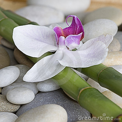 Orchid and bamboo
