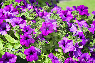 City flowers set two