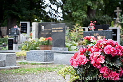 Pink begonia at a tombstone