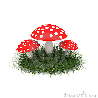 Fly agaric on the lawn