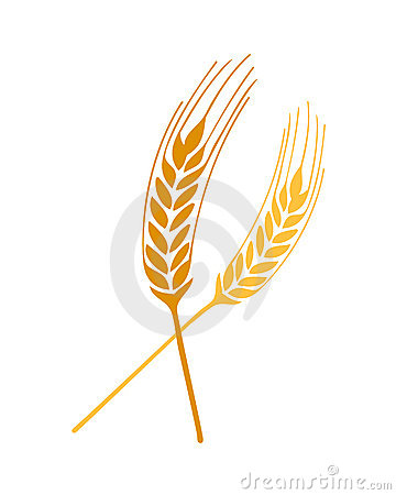 Wheat springs vector