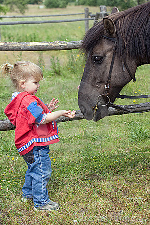 Small feeding horse young girl