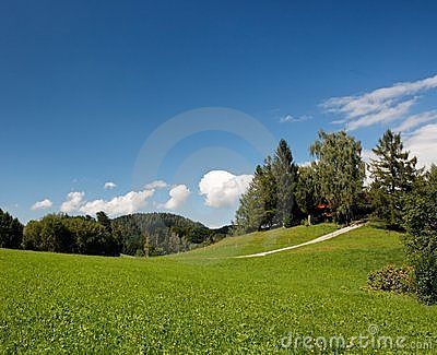 Lush Alpine meadow in summer