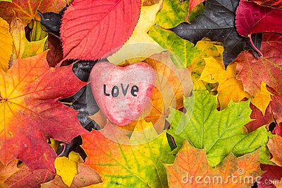 Red heart on Maple Leaves Mixed Fall Colors Background