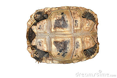 Tortoise isolated in white