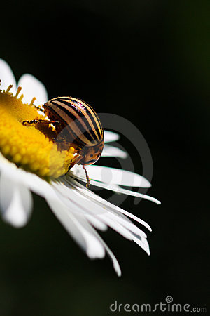 Close up with bug on flower