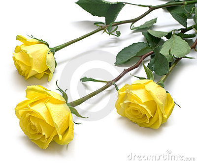 Yellow roses with green leaves
