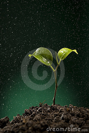 Green sprout growing from soil