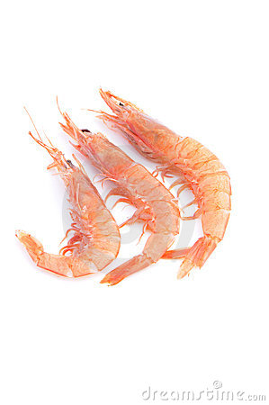 Group of prawn