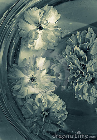Flowers in a glass bowl with water