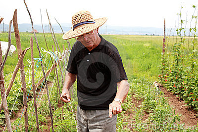 Old farmer man explains how to cultivate