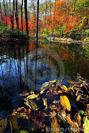 Creek in the wood during autumn