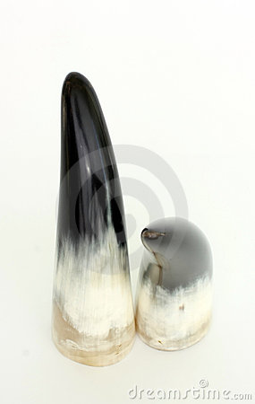 Two polished horn
