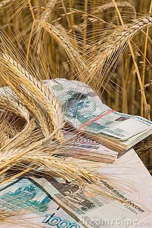 Crop of wheat and money.