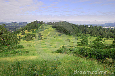 Grass hill with trees ontop of Mount Pisgah