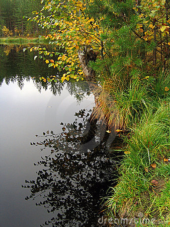 Forest lake shoreline in autumn