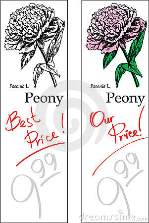 Peony - Two Price Tags