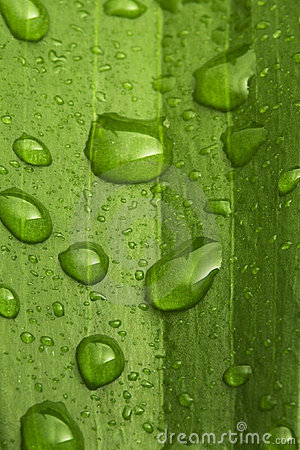 Water drops on leaf background
