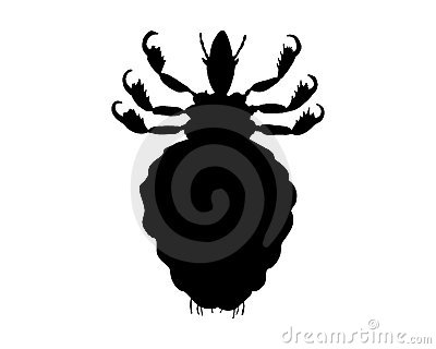 The black silhouette of a louse