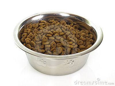 Bowl with cat food