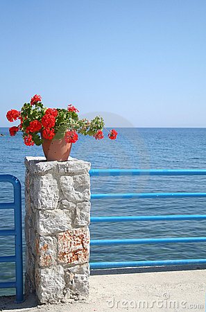 Flowers and the seafront