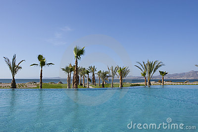 Resort Pool with Palm Tree and Sea View