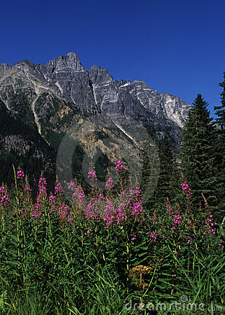 British Columbia Mountains