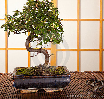 Bonsai tree and pruning shears