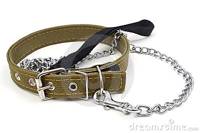 Driving dog and dog collar