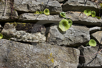 Plants growing in the old wall