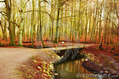 Forest and river in autumn