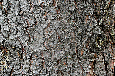 Tree bark, cover